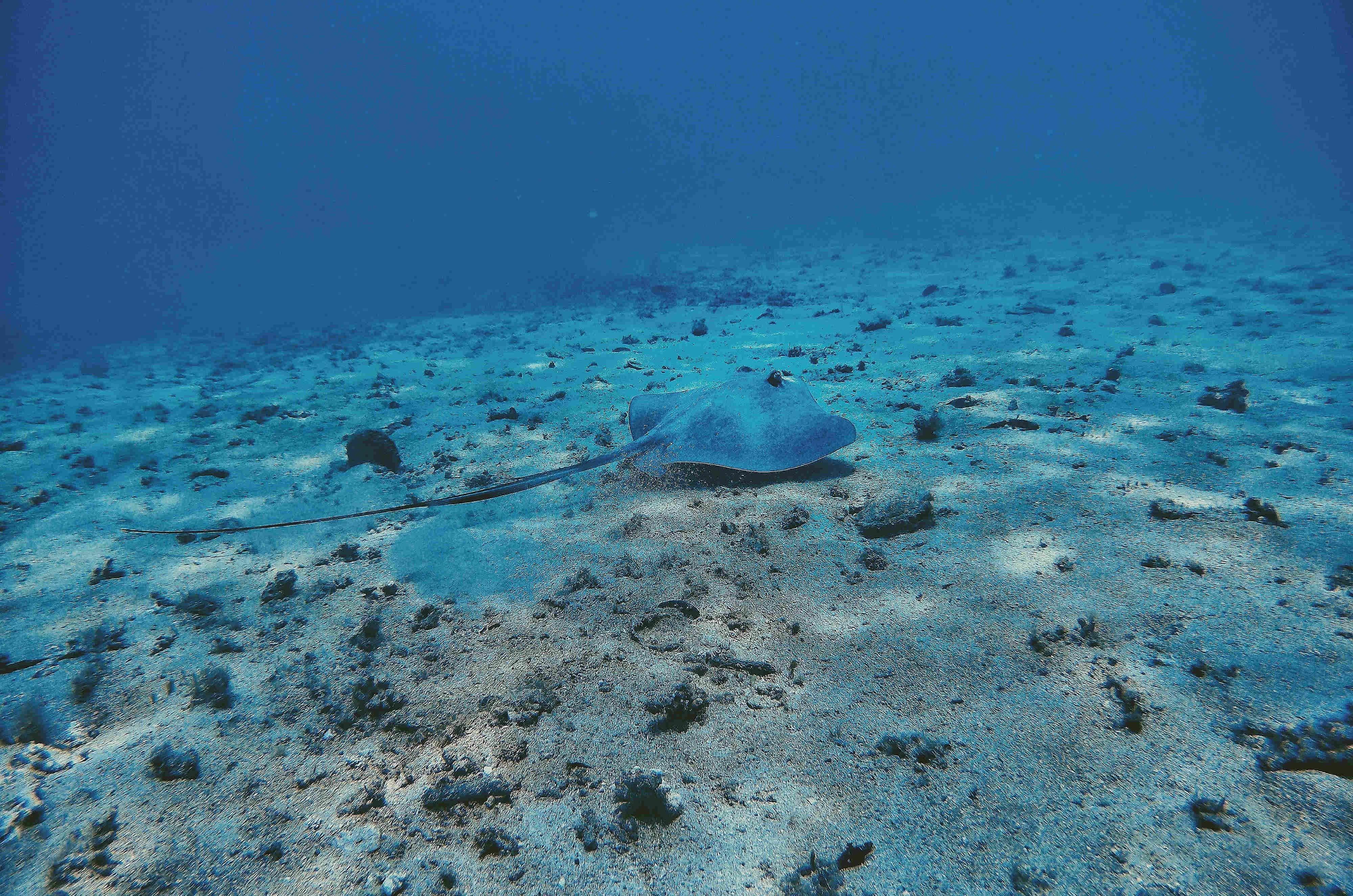 Fondo marino de una de las inmersiones en los tours de isla Coiba Unlimited Adventures