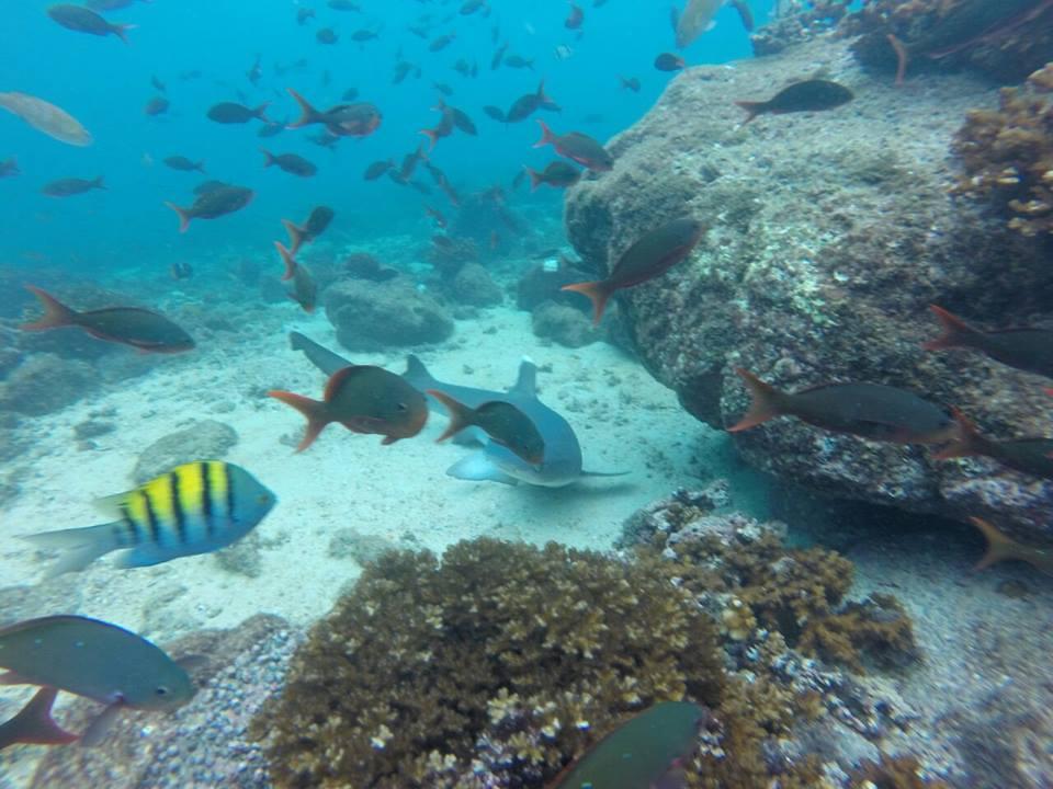 Imagen submarina de snorkel en el tour Unlimited Adventures Coiba