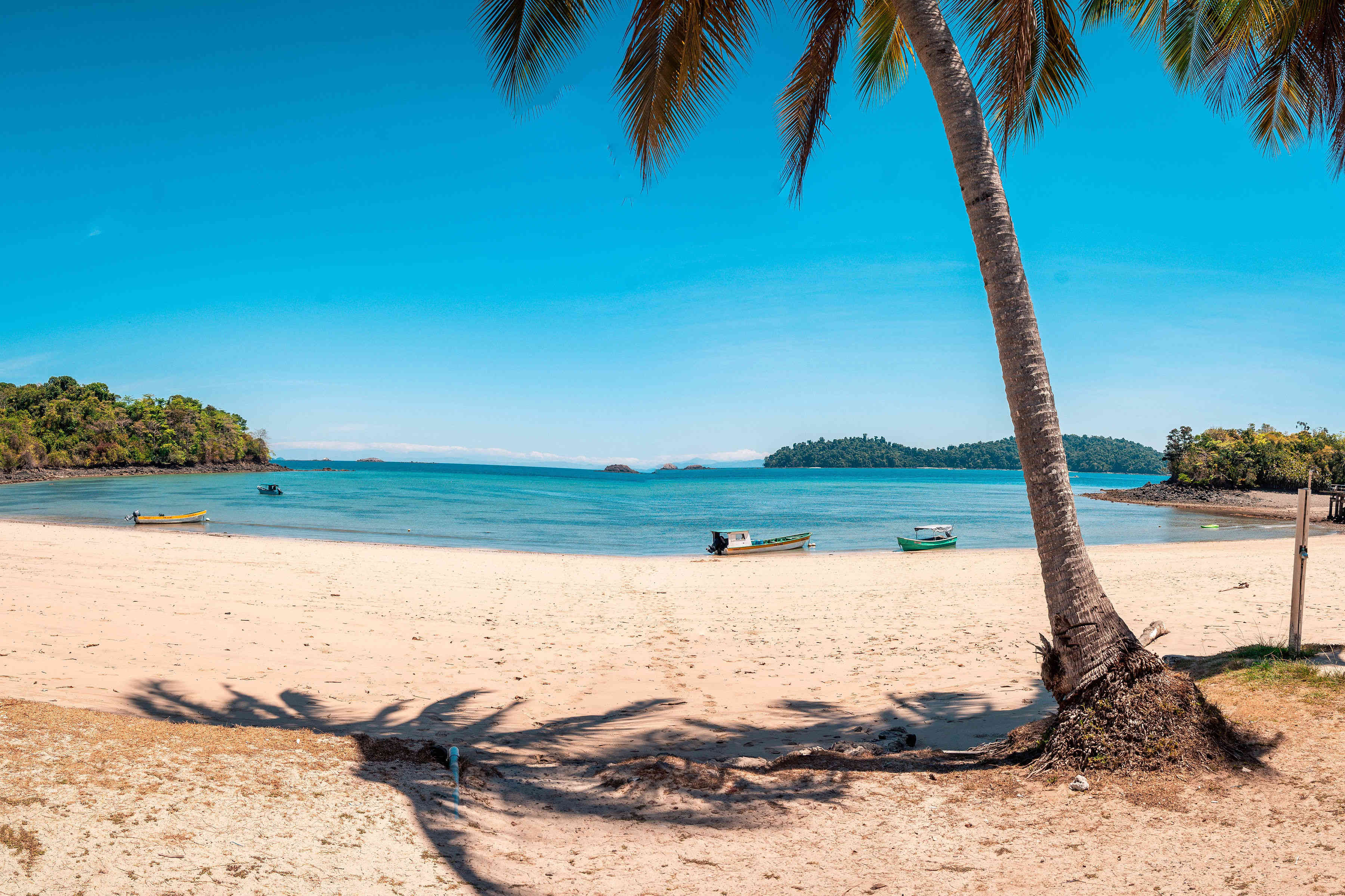 Plano playa y palmera